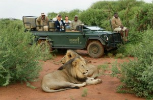 I'd love to go on Safari and see the 'big 5'