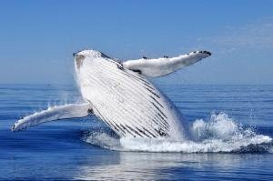 Whale watching has been on my bucket list since I can remember