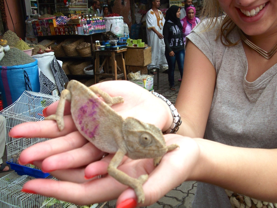 Meeting a few of the locals as we explored the many souks of Marrakech