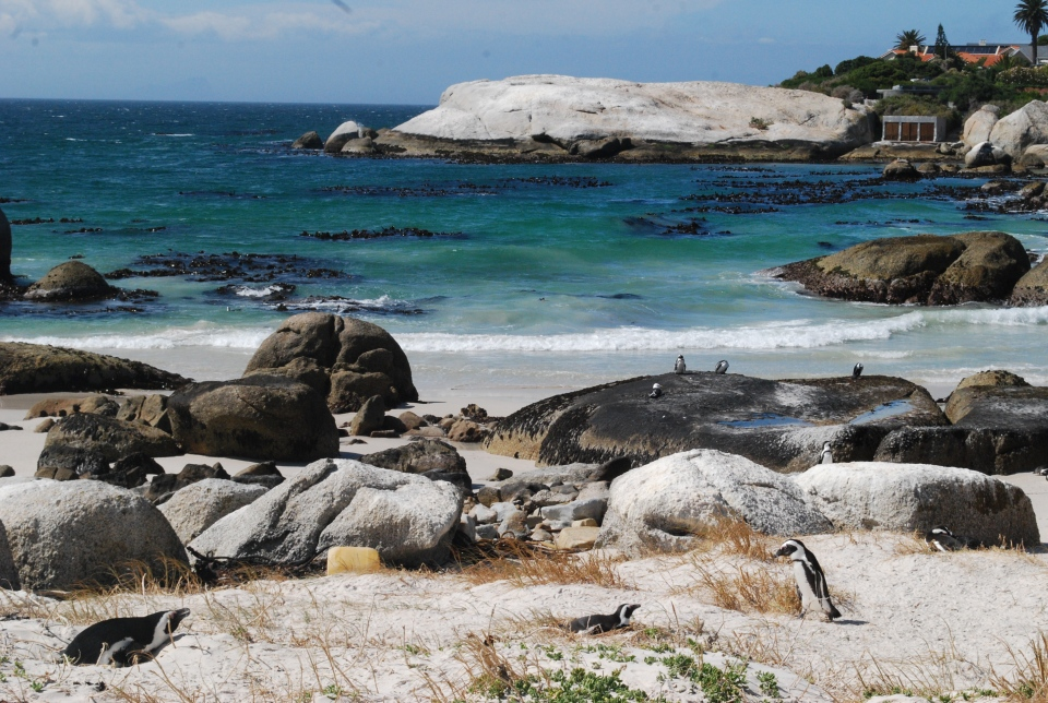 Boulders Bay - things to do in Cape Town